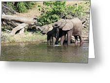 Elephants Drinking In Sinc Greeting Card