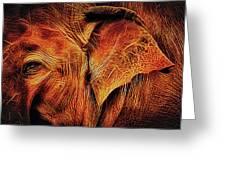 Elephant's Ear Greeting Card