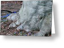 Elephant's Foot Greeting Card