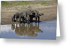 Elephants In The Mirror Greeting Card