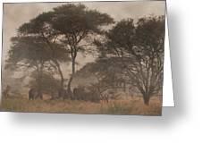 Elephants On The Serengeti Foggy Evening Greeting Card