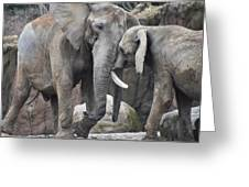 Elephants Playing 2 Greeting Card