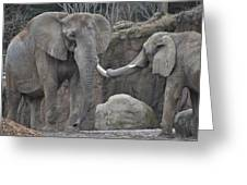 Elephants Playing 3 Greeting Card