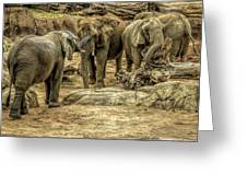 Elephants Social Greeting Card