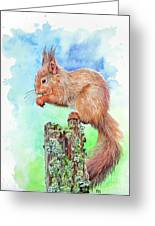 Elevenses - Red Squirrel Greeting Card