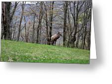 Elk, Blue Ridge Mountain Greeting Card