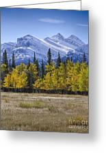 Elk Buffet With A View Greeting Card