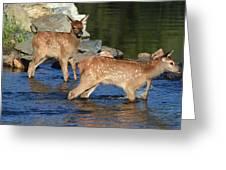 Elk Calf Crossing River 1 Greeting Card