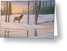 Elk  Carter Greeting Card