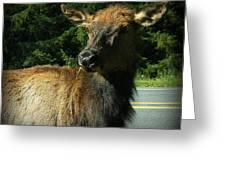 Elk Crossing Greeting Card