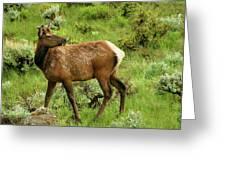 Elk Doe Greeting Card