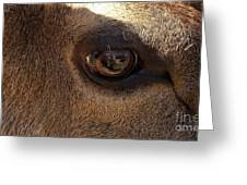 Elk Eye Close Up Greeting Card