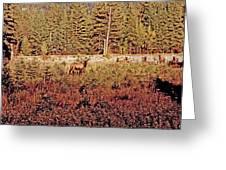Elk Harem Greeting Card