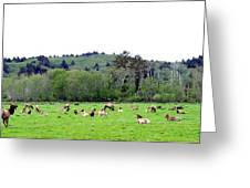 Elk Herd Greeting Card