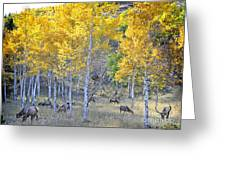 Elk In Rmnp Colorado Greeting Card