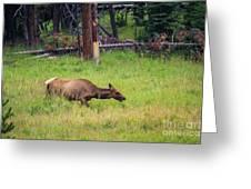 Elk In The Field Greeting Card