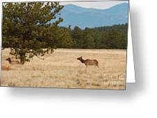 Elk In The Fossil Beds Greeting Card