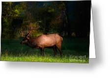 Elk In The Smokies. Greeting Card by Itai Minovitz