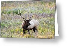 Elk In Wildflowers #1 Greeting Card