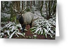 Elk In Winter Greeting Card