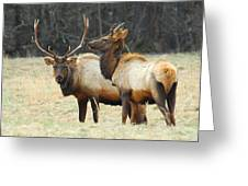 Elk Pair Greeting Card