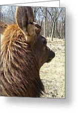 Elk Profile Greeting Card