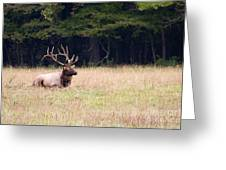 Elk Sitting Down Greeting Card