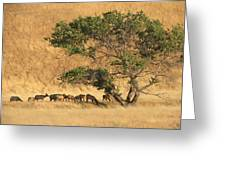 Elk Under Tree Greeting Card