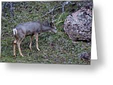 Elk With Antlers Greeting Card