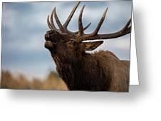 Elk's Screem Greeting Card