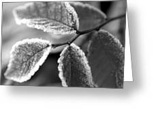 Elm Leaves In Frost  Greeting Card