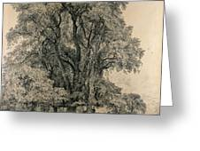 Elm Trees In Old Hall Park Greeting Card by John Constable