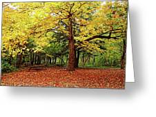 Elora Gorge Campsite In Fall Greeting Card