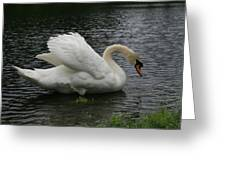 Eltham Swan II Greeting Card
