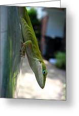 Emaciated Lizard Greeting Card