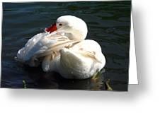 Embden Goose 4 Greeting Card