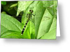 Emerald Dragonfly Greeting Card