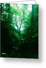 Emerald Glade Greeting Card
