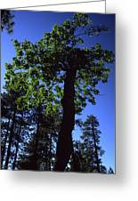 Emerald Oak Greeting Card