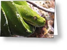 Emerald Tree Boa Greeting Card