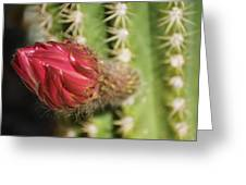 Torch Emergence Greeting Card