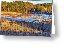 Emerging Marsh Greeting Card