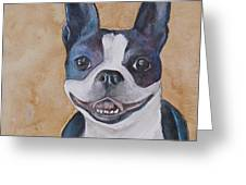 Emma The Boston Terrier Greeting Card