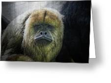 What A Face Greeting Card