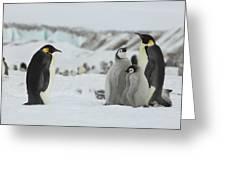 Emperor Penguin Landscape Greeting Card