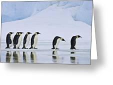 Emperor Penguins Greeting Card