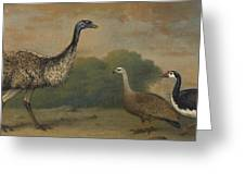 Emu, Cape Barren Goose And Magpie Goose Greeting Card