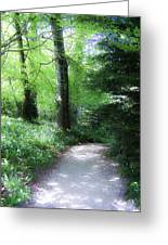 Enchanted Forest At Blarney Castle Ireland Greeting Card