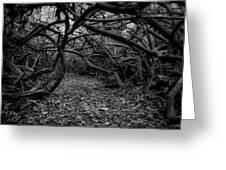 Enchanted Hau Forest Greeting Card