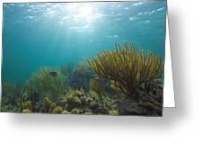 Enchanted Seas Greeting Card